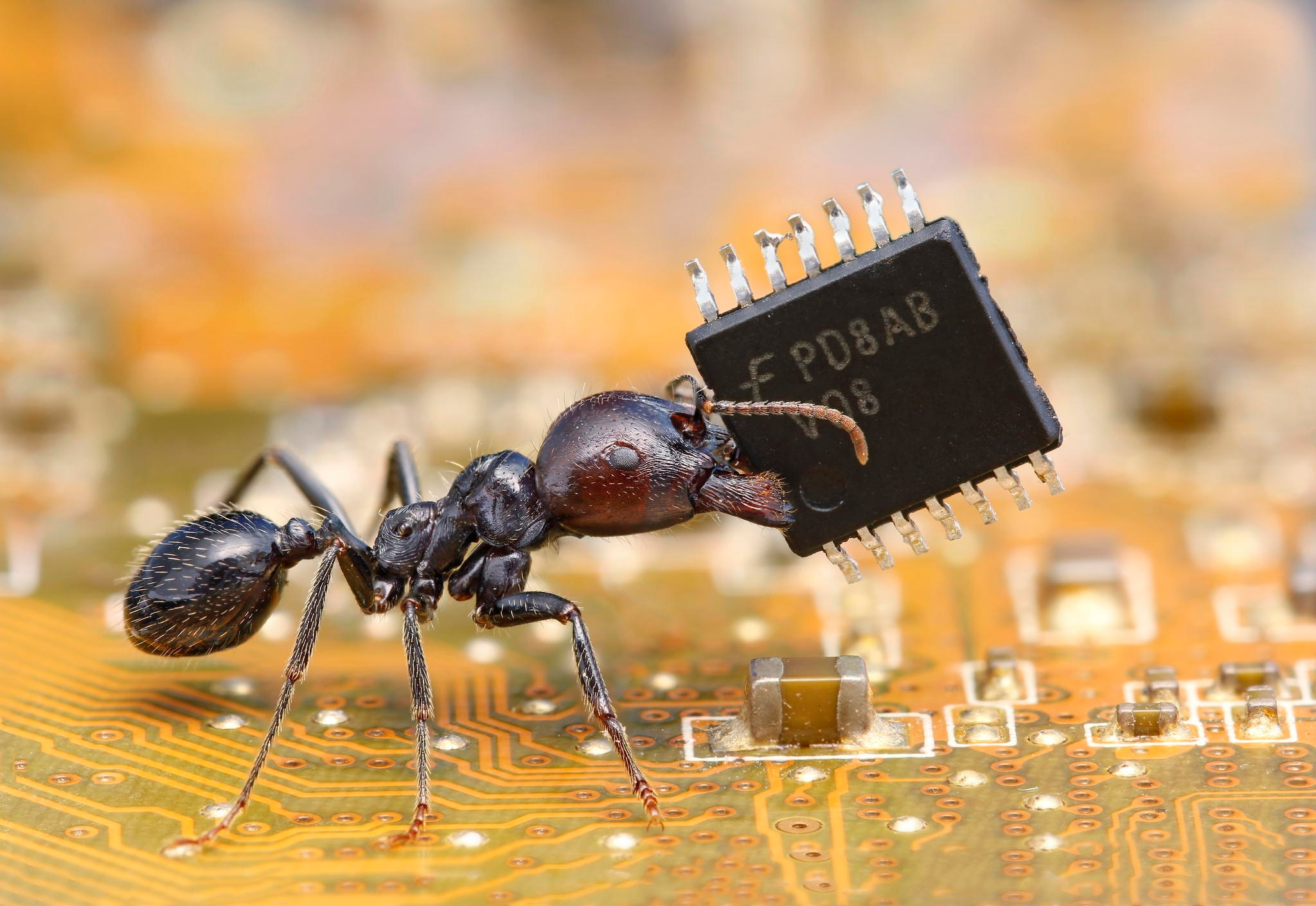 Ant-with-Microchip